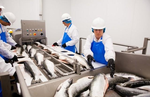 Производство - переработка рыбы