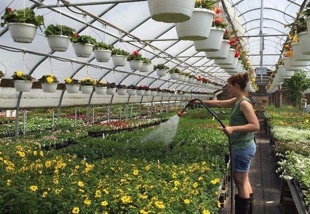 Работа на фермах и в теплицах