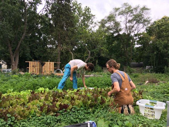 WWOOF предлагает стажировки в сельском хозяйстве