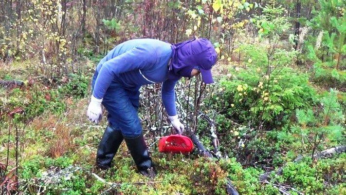 Работа в Финляндии без знания языка